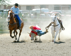 Cody Jones wrestles a calf to the ground while competing in the steer wrestling competition held Saturday at The Redwood Acres Fairgrounds. Events in the rodeo included bare-back and saddle riding, individual, team, and breakaway roping, and bull riding. Daniel Solomon/The Eureka Reporter