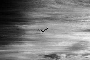 P2-SYH-BriannaSablan-Flight